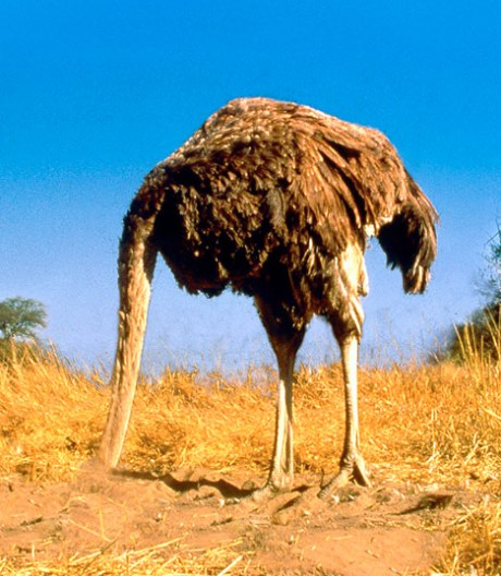 an ostrich with its head firmly planted in the ground.