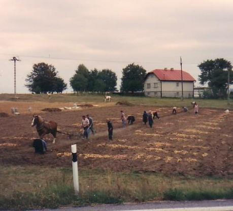 Horse-drawn plowing in rural Slovakia, 1992