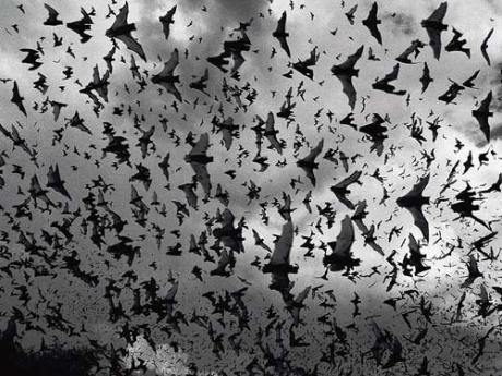 Thomas Nagel's famous paper, 'What is it like to be a bat?' considered the particular perspective that bats have on the world and how it differs from our perspective.