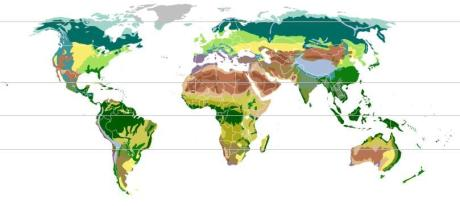 A map of terrestrial biomes from Wikipedia.