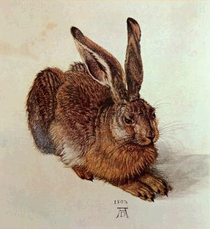 "...but Clark says that this famous picture of a hare lacks ""inner life."" I disagree. I see a close parallelism between this portrait of a hare and Dürer's self portraits, and indeed Clark comments on the psychological depth of Dürer's portrait of Oswald Krell."