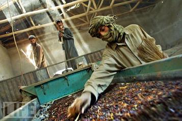 afghanistan raisins