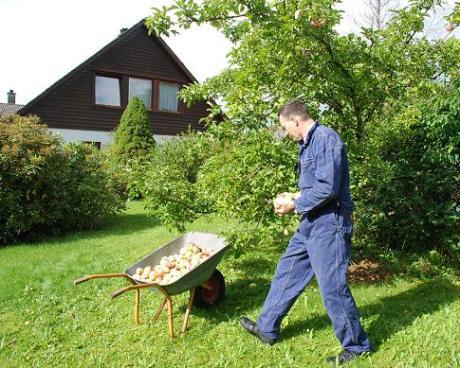 Harvesting apples (photo credit: Laura Nielsen)