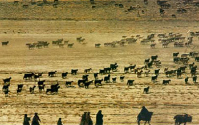 "Nomadic pastoralism: ""The Qashqai of Iran use a system of opportunistic management that has evolved over centuries of dependence on a varied and unpredictable environment."" (from http://www.fao.org/nr/giahs/candidate-system/candidate/qashqai/en/)"