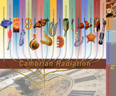 The Cambrian explosion, or Cambrian radiation, was a preemption of historical continuity.