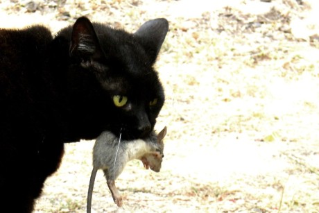 Cats: essential to maintaining the grain stores of early terrestrial civilization.