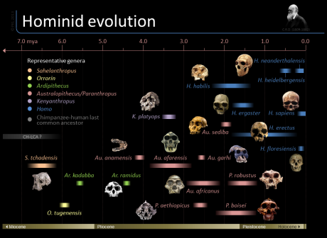 hominid-evolution