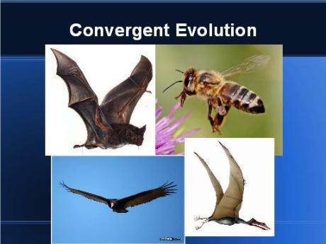 convergent flight