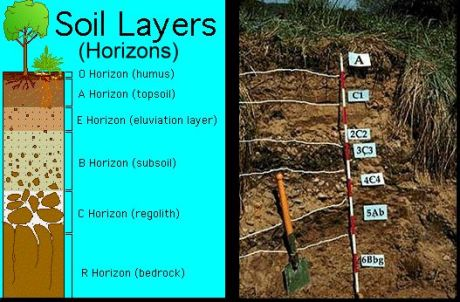 Soil horizon: Horizontal layers of soil which are distinct from one another. These develop over time due to many factors including the addition of decaying plant material, chemical weathering of rock particles in the soil, and deposition of different kinds of rock materials.