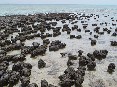 Do we live in a universe of stromatolites?
