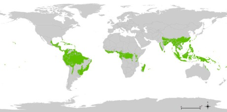 Contemporary global distribution of the tropical rainforest biome