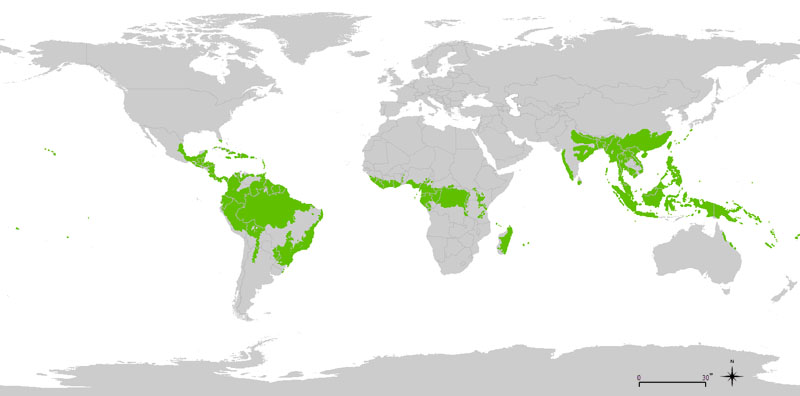 Good Contemporary Global Distribution Of The Tropical Rainforest Biome