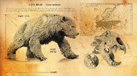 Cave bear 1