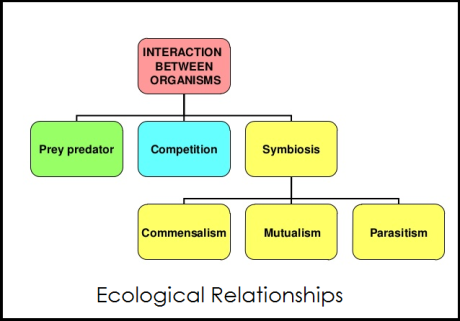 ecological relationships
